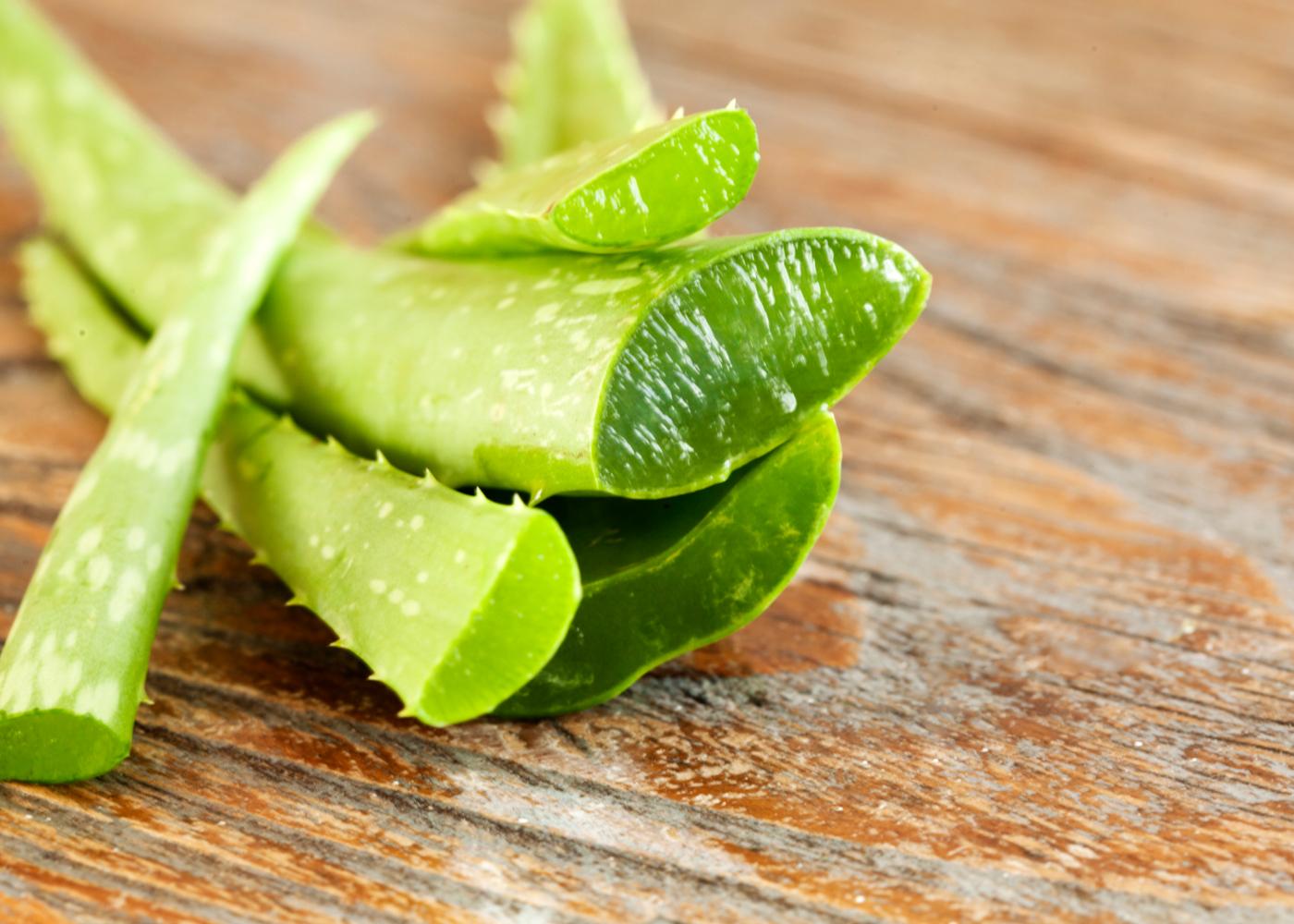 planta aloe vera aloe vera no tratamento da acne