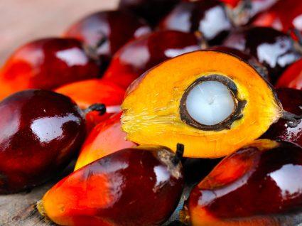Frutas das quais se faz o óleo de palma
