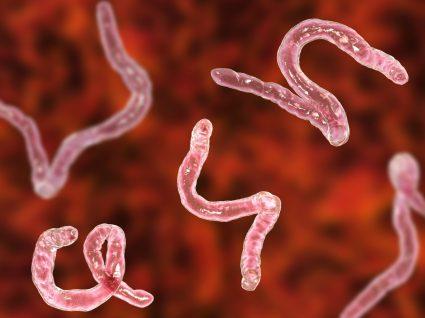 Lombrigas: como prevenir eficazmente a infeção por estes parasitas