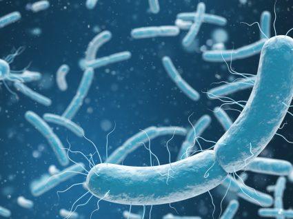 Parasitas intestinais: sintomas, prevenção e tratamento