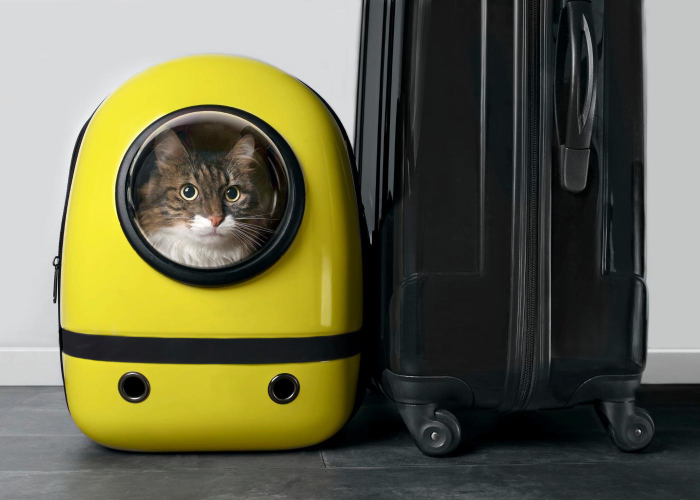 gato na transportadora para avião