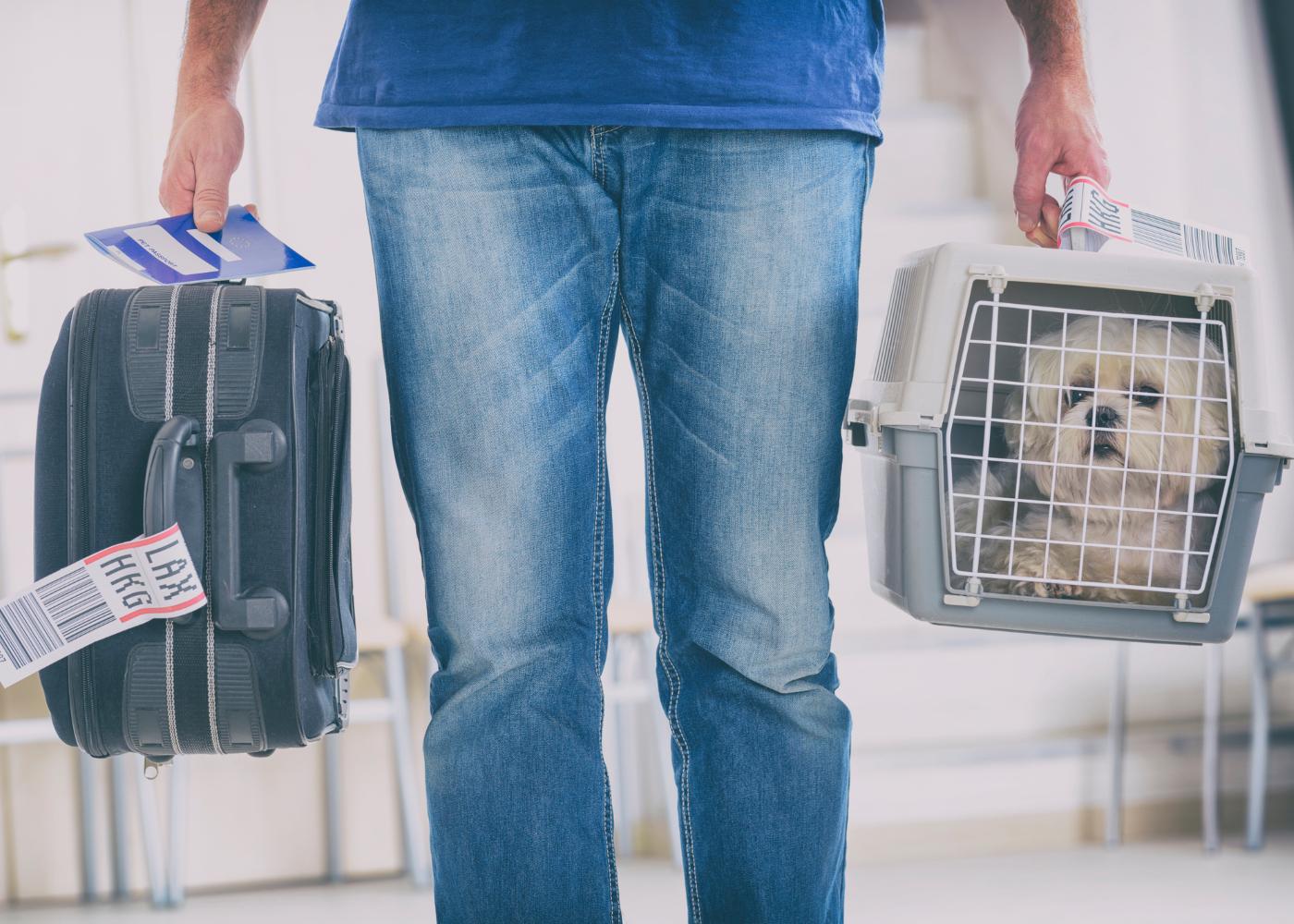homem com mala e caixa transportadora animal