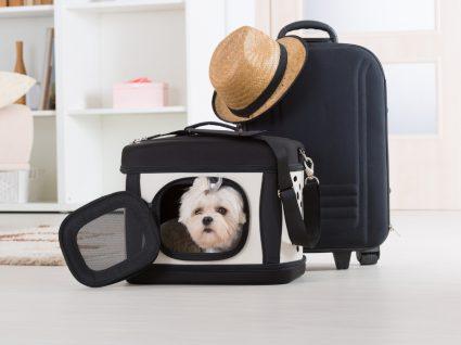 cão na transportadora para viajar