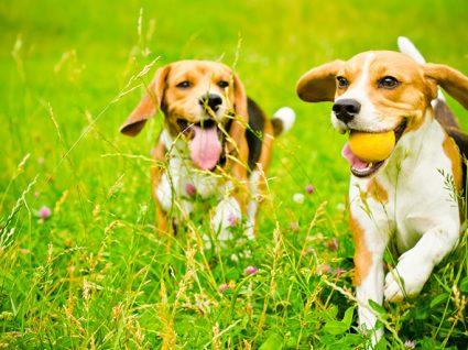 Lagarta do pinheiro: sintomas nos cães a que deve estar atento