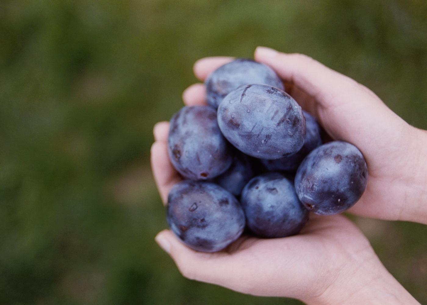 Alimentos para comer de manhã: ameixas