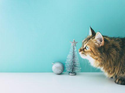 prendas de natal para gatos