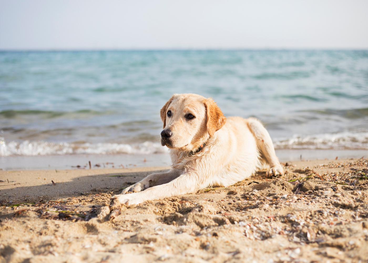 levar o seu cao a praia dicas
