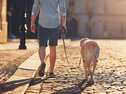 dono a passear cão na rua