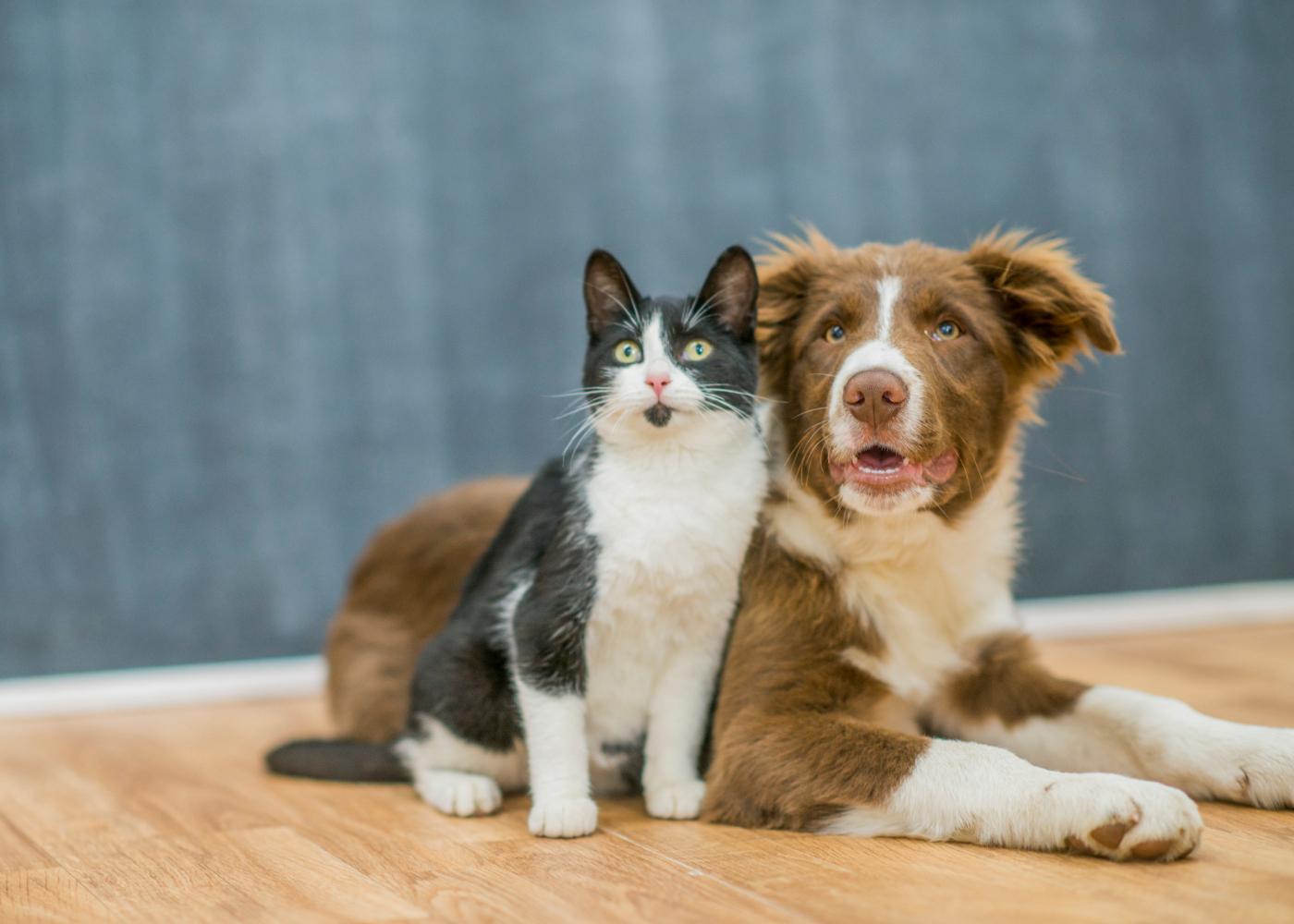 transicao da racao de caes e gatos
