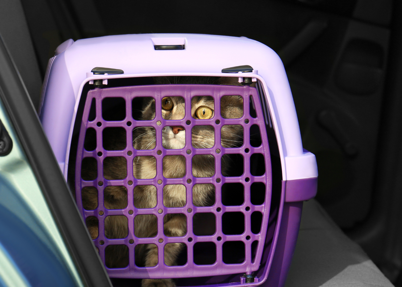 viajar de carro com um gato dicas