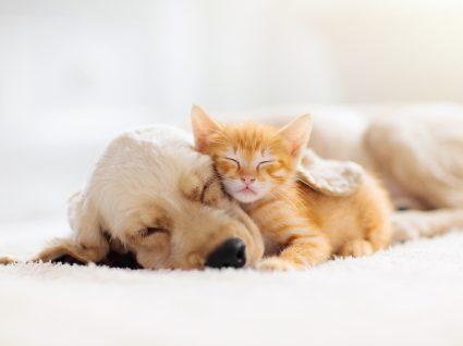 Cão e gato a dormirem juntos