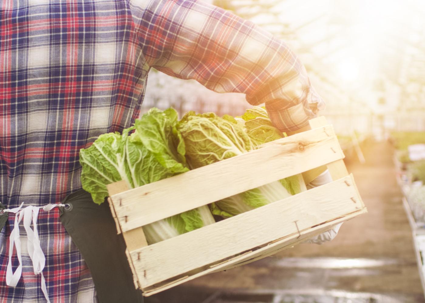 alimentos que pode replantar