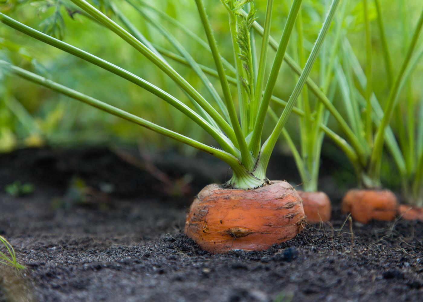 alimentos que pode replantar alimentos que tem casa