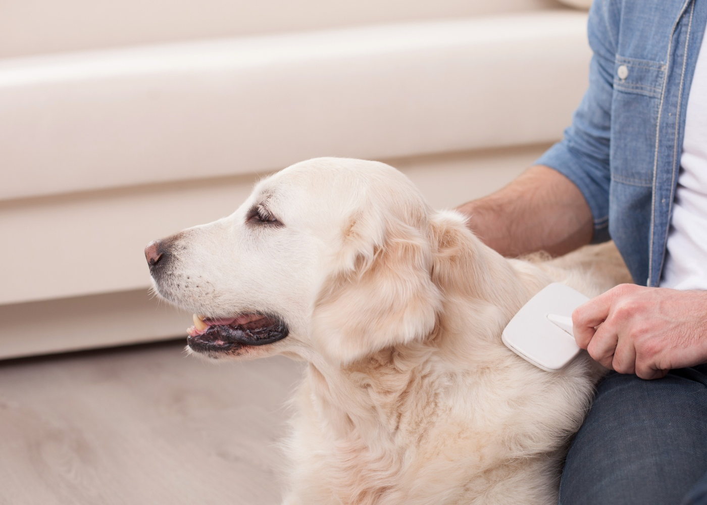 Caspa em cães: sinais a estar atento