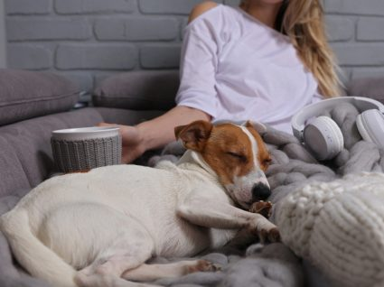 formas de diminuir o stress no cão