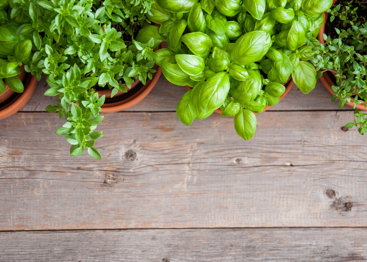 Alimentos que pode replantar: ervas aromáticas