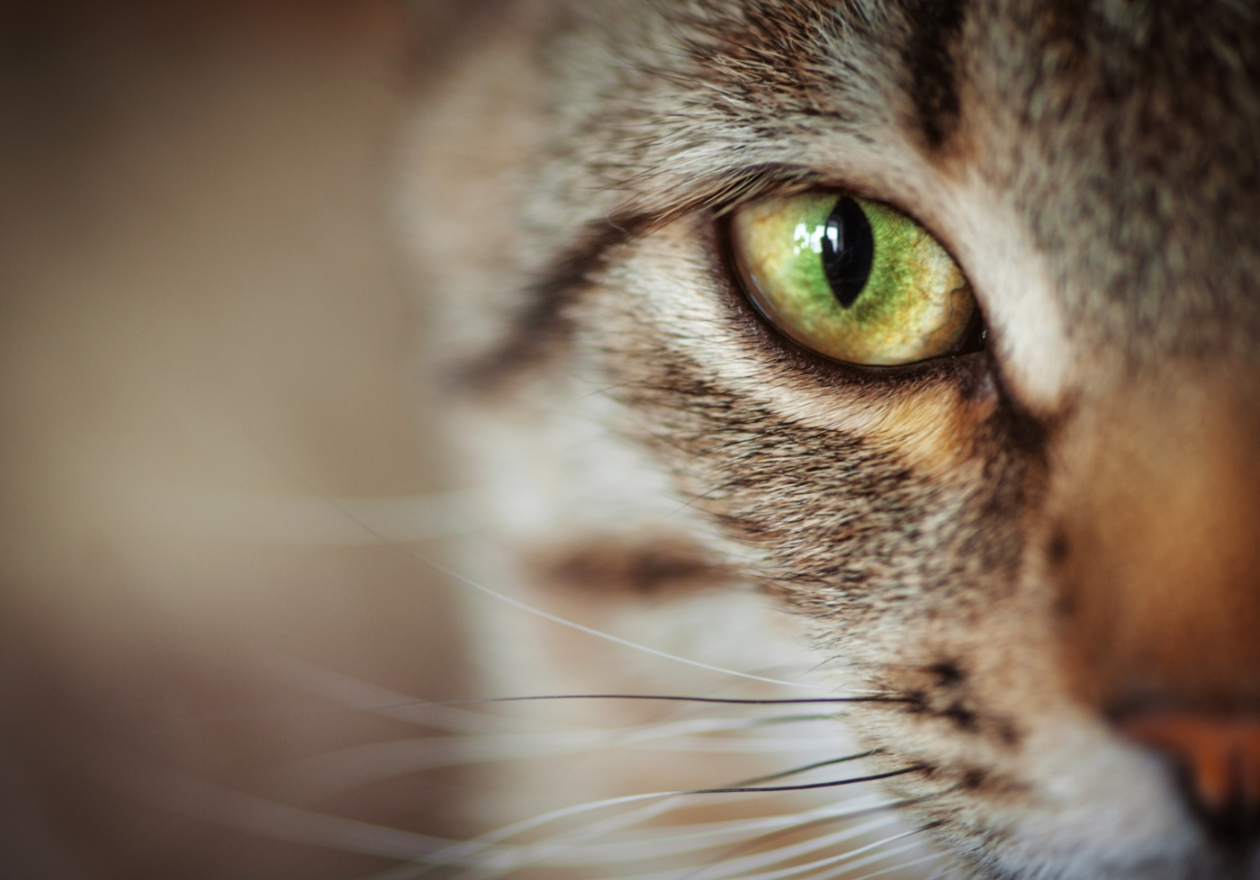 bigodes dos gatos cuidados a ter