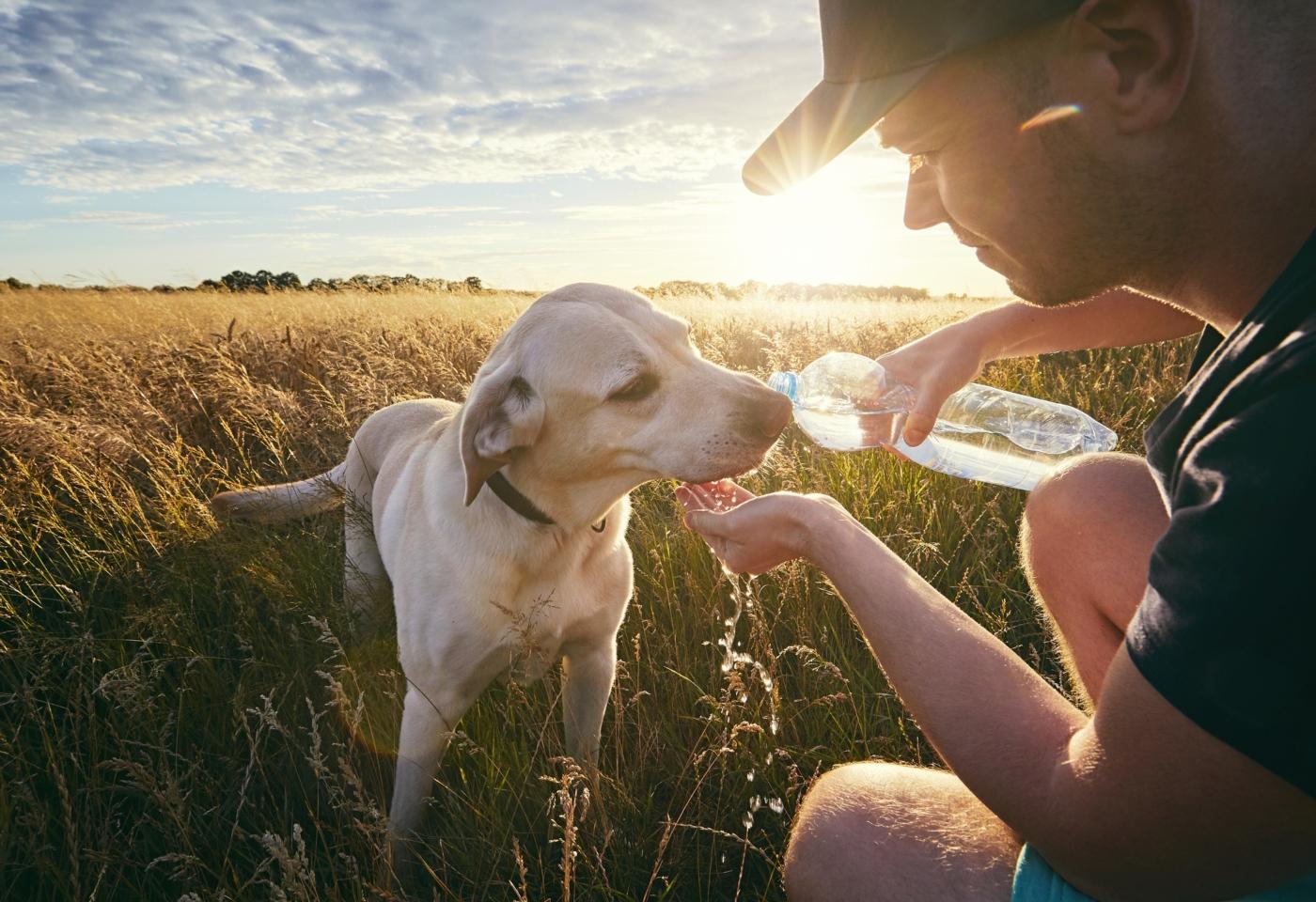 Golpe de calor nos animais: o que fazer