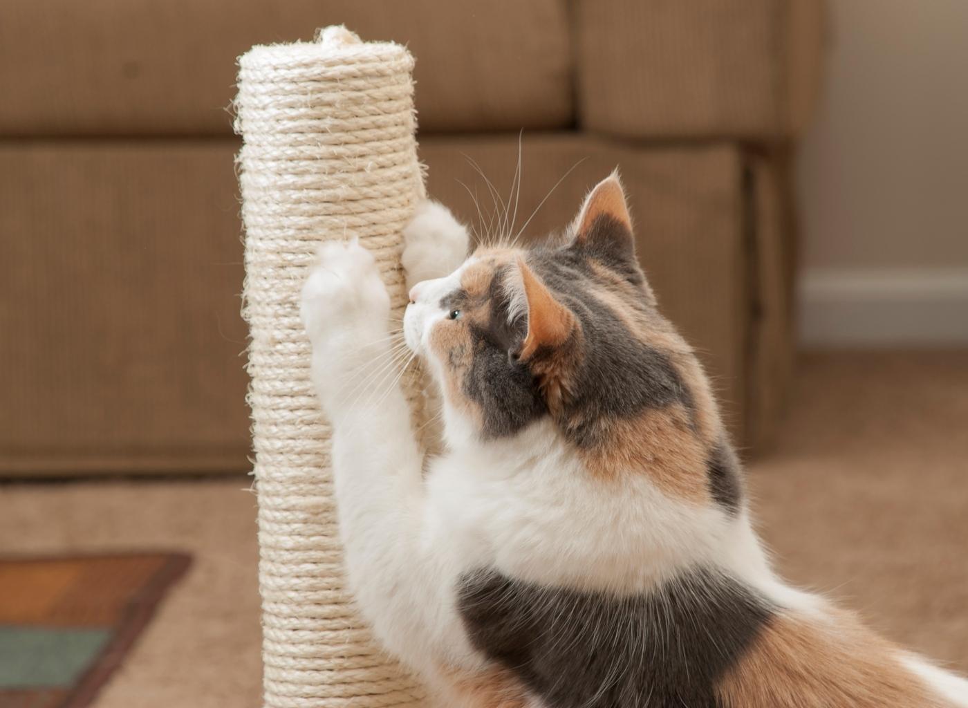 Ensinar o gato a arranhar em locais próprios