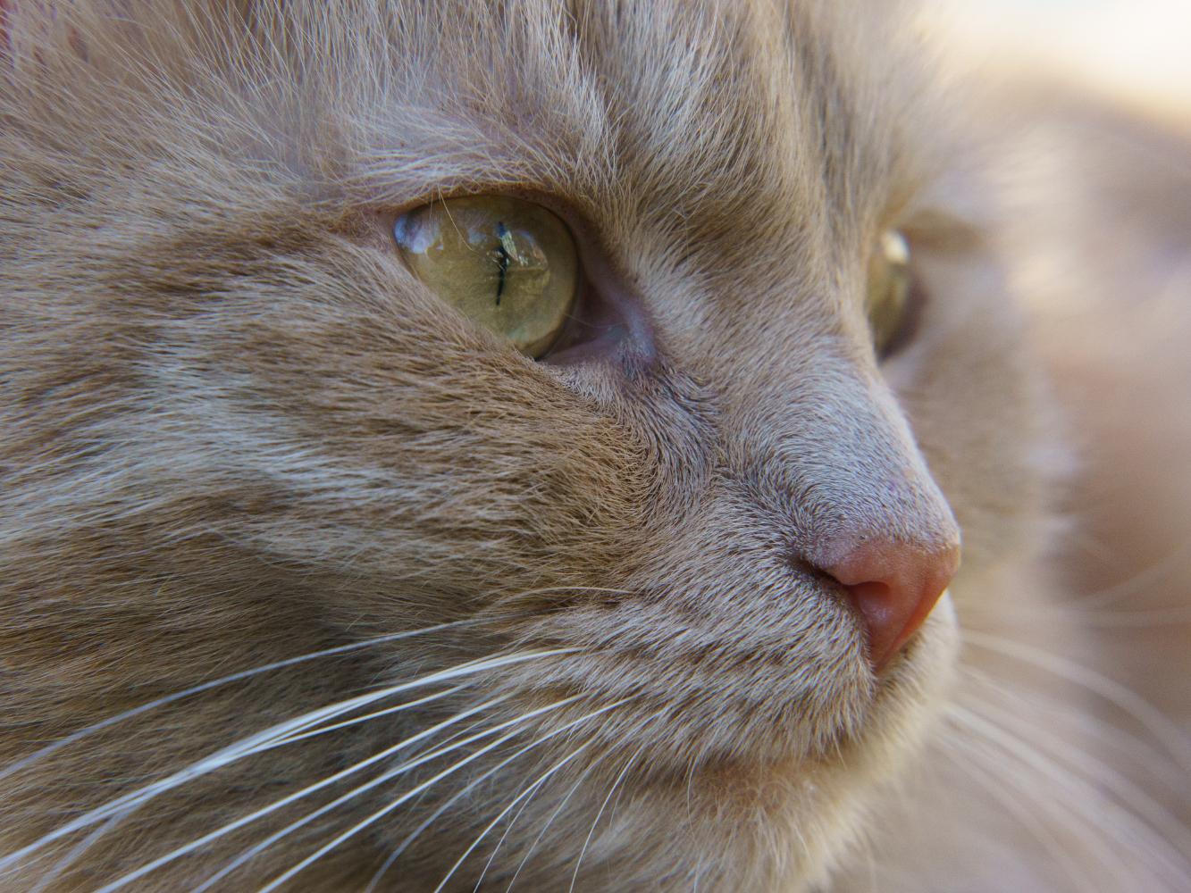 bigodes do gato curiosidades