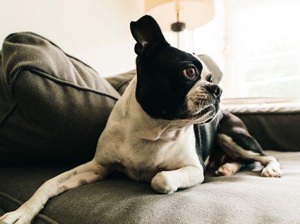 Cuidados a ter quando tem a cadela com o cio