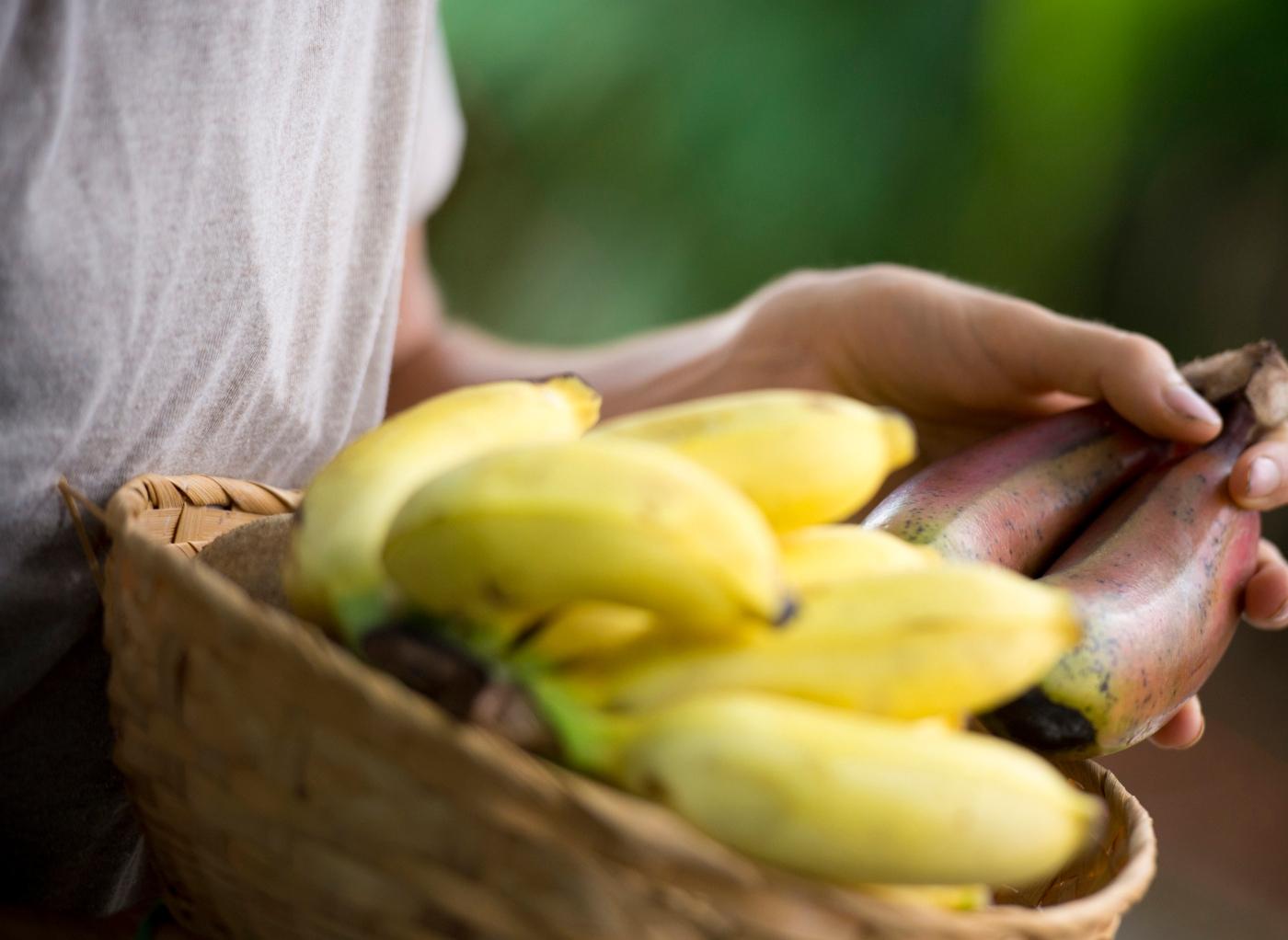Diarreia: tentar comer mais banana