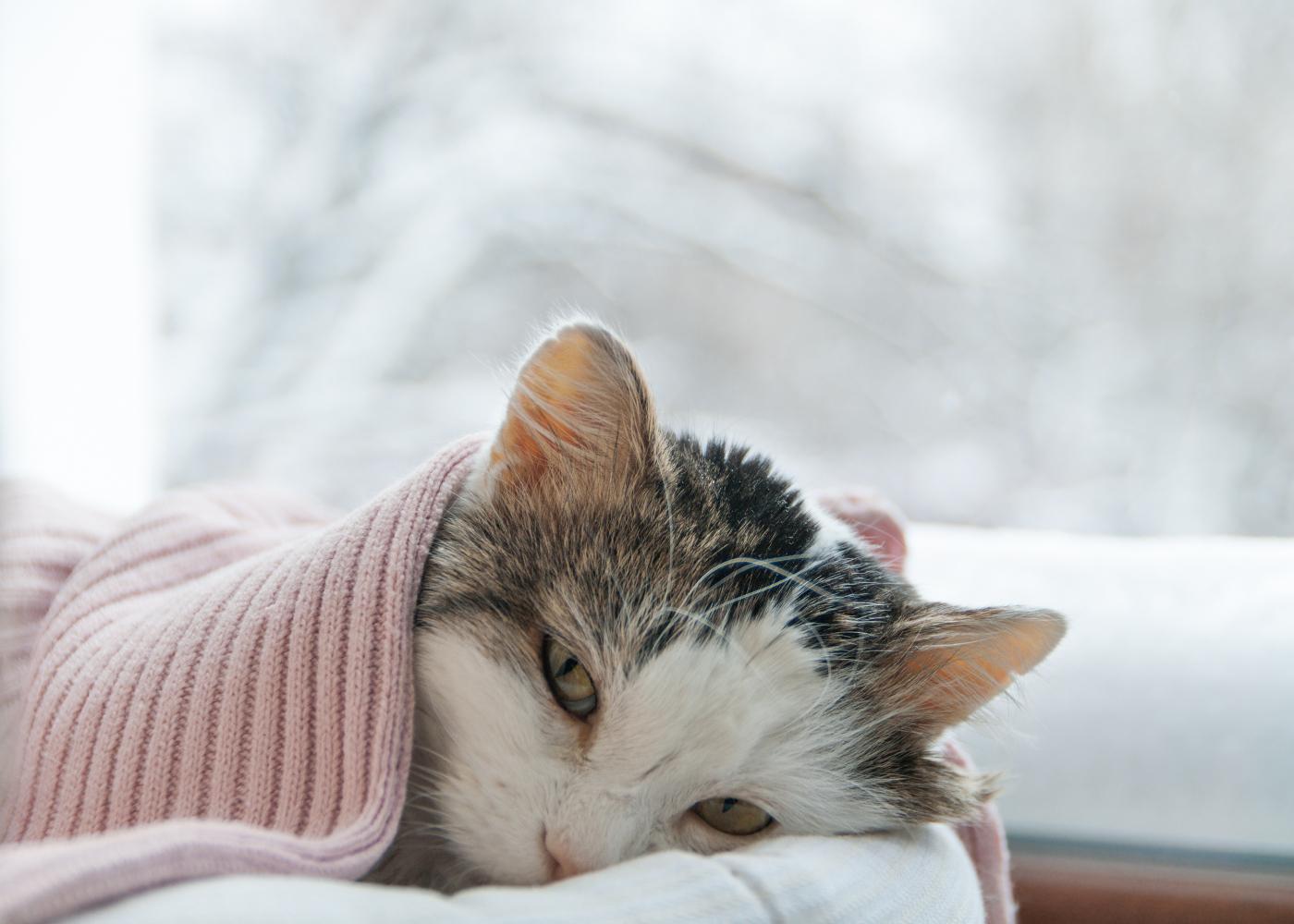 Gato deitado na sua caminha com ar adoentado
