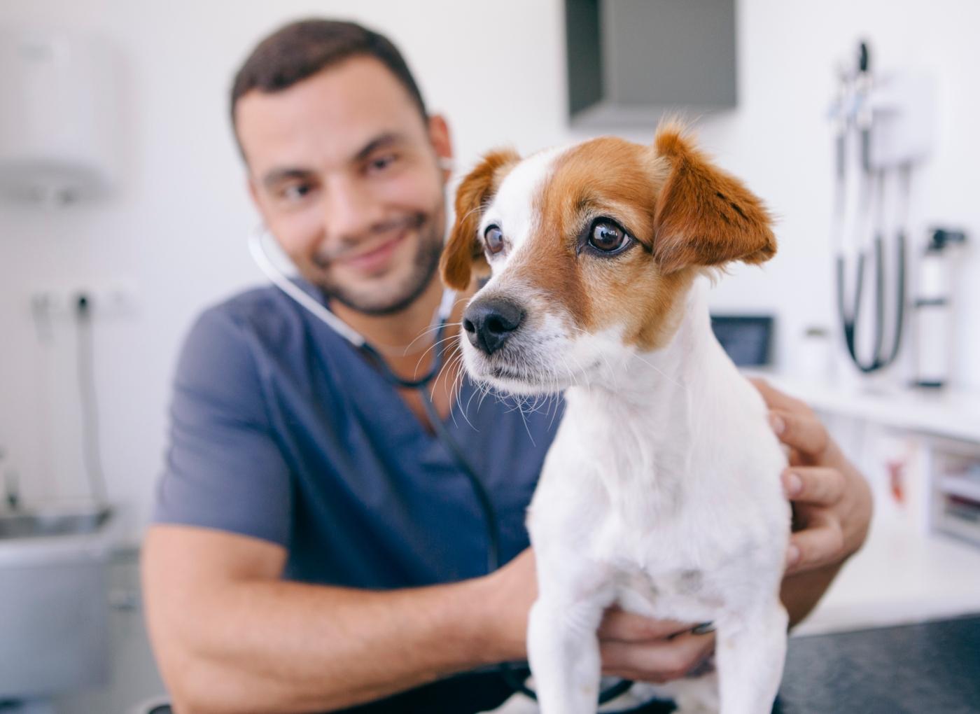 Doenças parasitárias em cães: cuidados a ter
