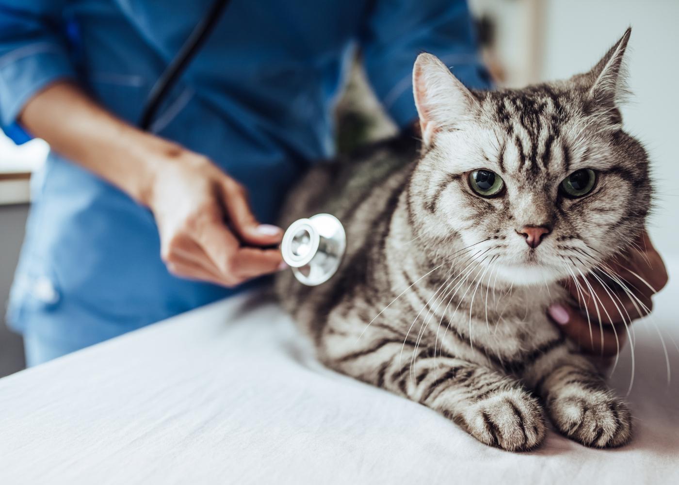 transicao da racao para caes e gatos medidas preventivas