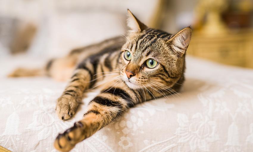 Problemas renais em gatos: cuidados a ter