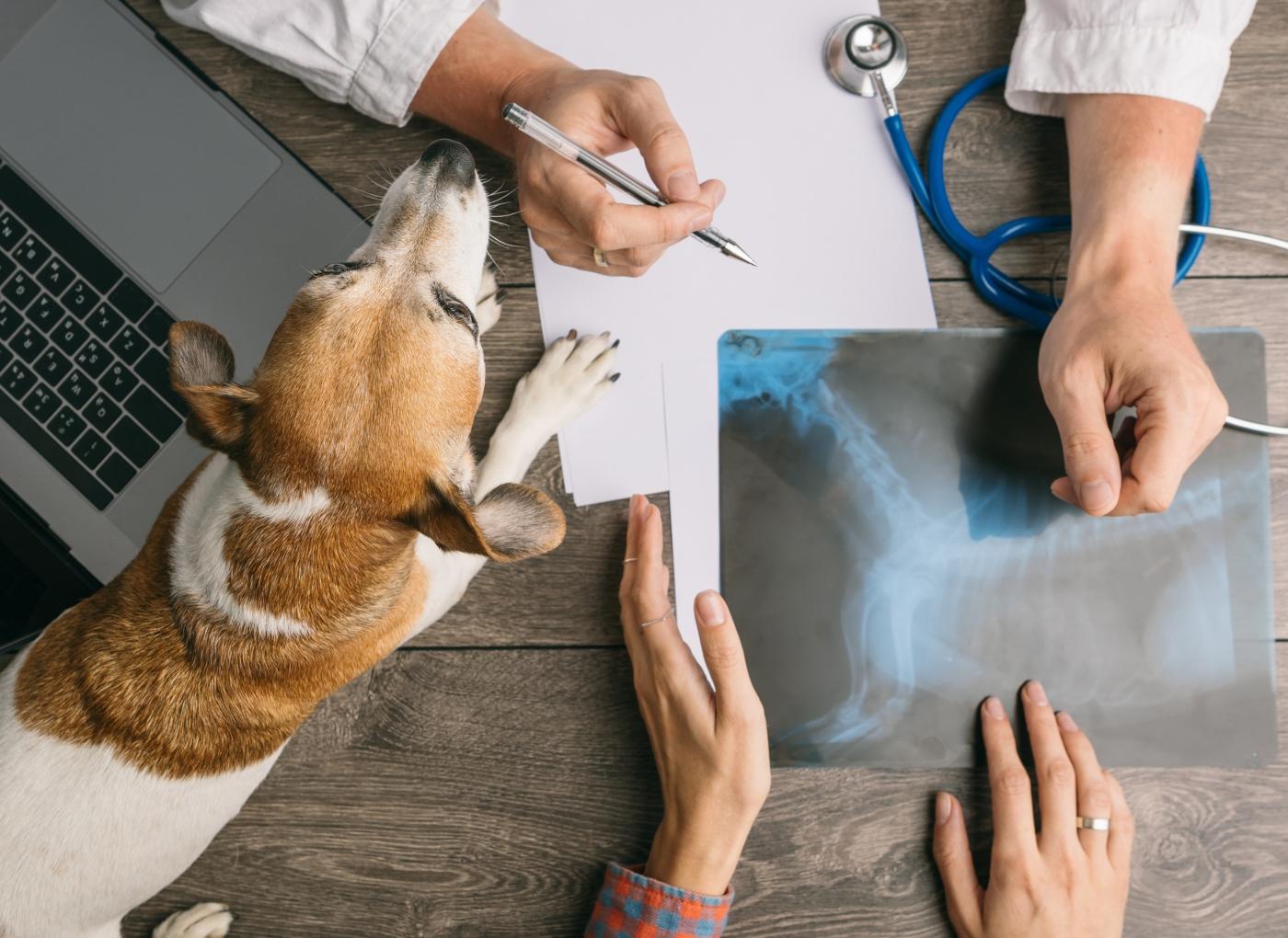 Veterinário a mostrar radiografia de cão ao tutor