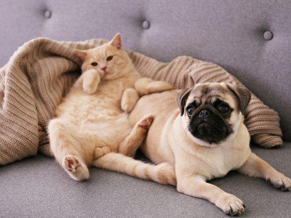 Novas regras do registo e licenciamento de animais de companhia