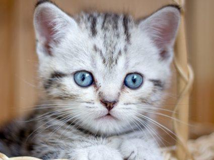 Enxoval para gatos: tudo o que precisa para receber o novo elemento da família