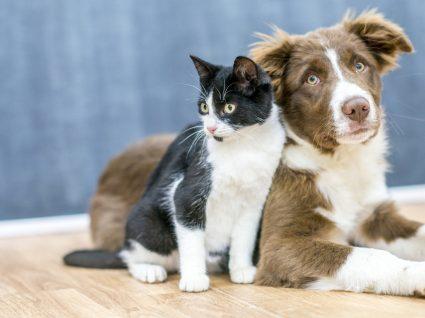 Cão ou gato: qual o melhor para encaixar na sua vida?