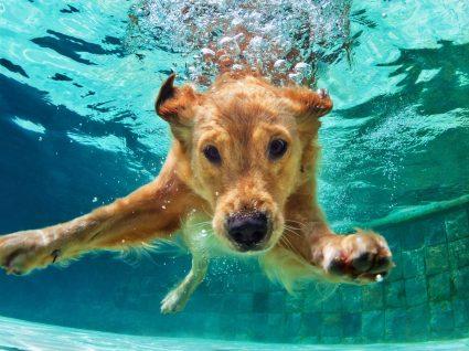 12 raças de cães que podem ter dificuldade em nadar: descubra quais são