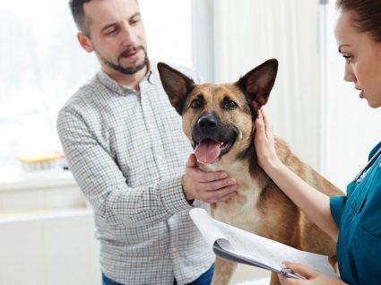 Diabetes em cães: fique atento aos sinais e cuide do seu patudo