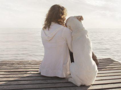Adotar um animal de estimação: saiba se está preparado para o fazer