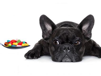 Medicação perigosa para cães: o que não deve dar ao seu melhor amigo!