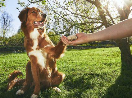 Descubra escolas para cães em Lisboa e tenha um animal bem-comportado
