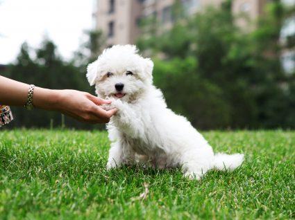 Treino animal: encontre as melhores escolas para cães no Norte e Centro do país
