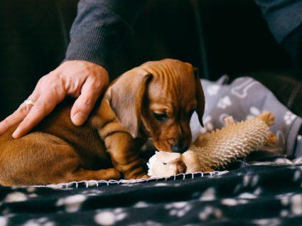 Prendas de Natal para cães: 11 ideias que os patudos vão adorar
