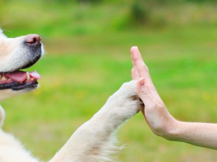 Treino com reforço positivo: a nova corrente de treino canino que dá resultado