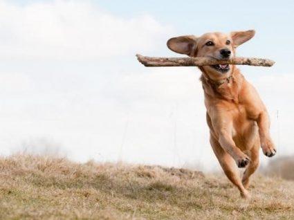 8 Formas e benefícios de exercitar o seu cão