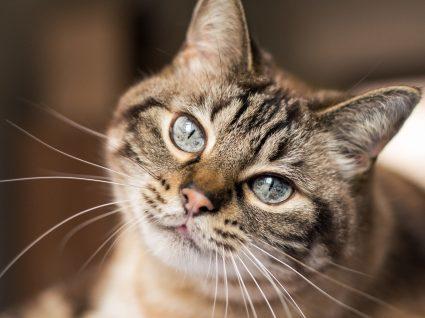 As 4 doenças mais comuns em gatos: conheça-as bem