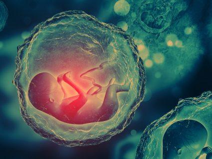 Criopreservação de células estaminais: banco público ou privado?
