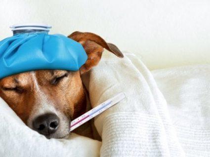 5 Sinais de febre nos animais: saiba reconhecê-los e o que fazer