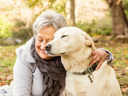 Como cuidar de um cão sénior: dicas e conselhos para melhorar a vida do seu patudo