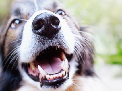 Tártaro em cães: saiba como prevenir e tratar este problema
