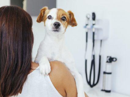 Zoonoses: um perigo para a nossa saúde e dos nossos amigos de 4 patas