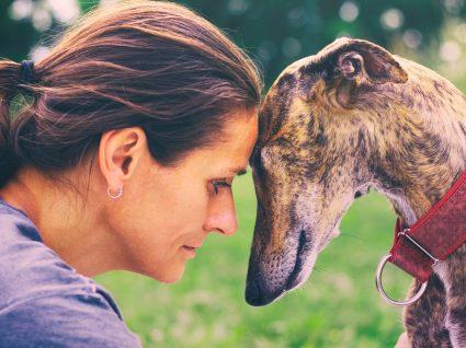 Como lidar com a perda de um cão: estas 6 dicas podem ajudar!